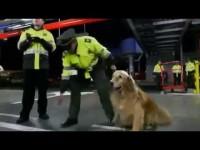 Alerta Aeropuerto – Unidad especial canina