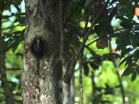 Amazonas – La ruta indomable