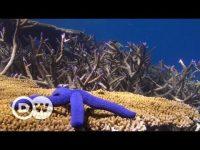Australia: La gran barrera de coral en peligro
