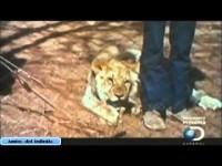 Christian el león