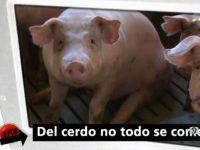 del cerdo no todo se come repor