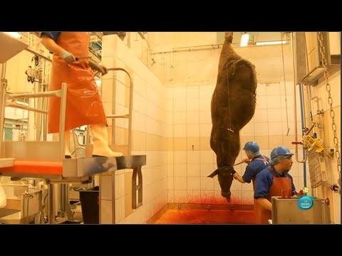 El camino de la carne (Documentos TV)