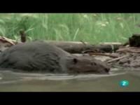 El lago de los castores (El Hombre y la Tierra)