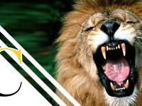 El león (Yo Depredador)