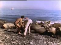 El Mundo Submarino De Jacques Cousteau - El Retorno Del Elefante Marino