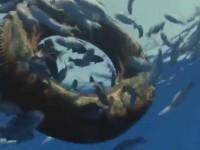 El reino del Océano – Gigantes de las profundidades