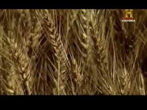 El trigo (Maravillas Modernas)