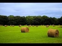 La agricultura orgánica