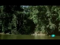 La selva virgen venezolana (El Hombre y la Tierra)