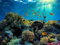 La Vida en el Arrecife 2