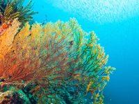 La Vida en el Arrecife 3
