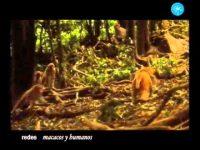 Macacos y humanos, el secreto del éxito (Redes)