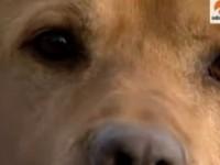 Perro, el mejor amigo del hombre