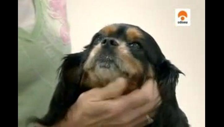 perros de pedigri al descubierto