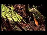 Puerto Rico (Castellano-Manchegos por el Mundo)