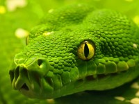 Selva tropical – El secreto de la vida